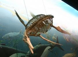Image result for ichthyosaur nevada