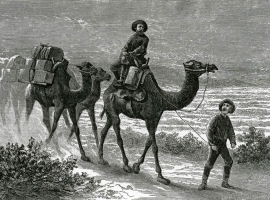 Camels | ONE